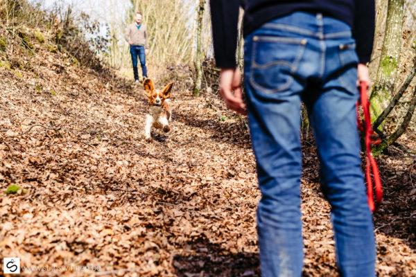 Hond Pepper vliegt door het bos